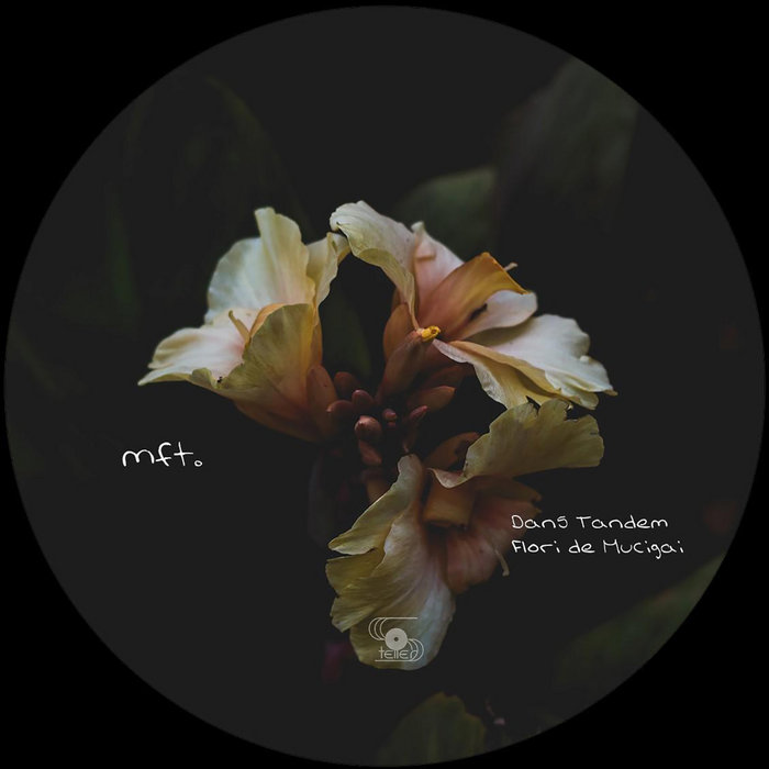 Download Flori de Mucigai on Electrobuzz