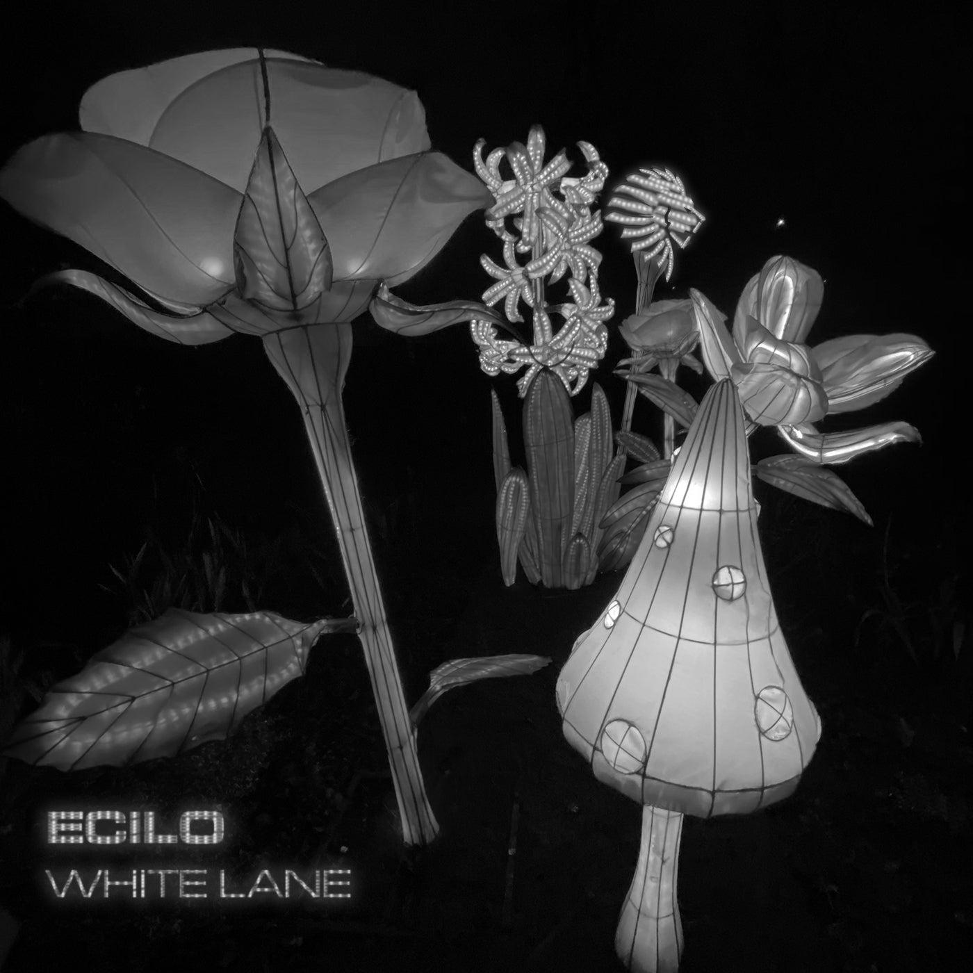 Download White Lane on Electrobuzz