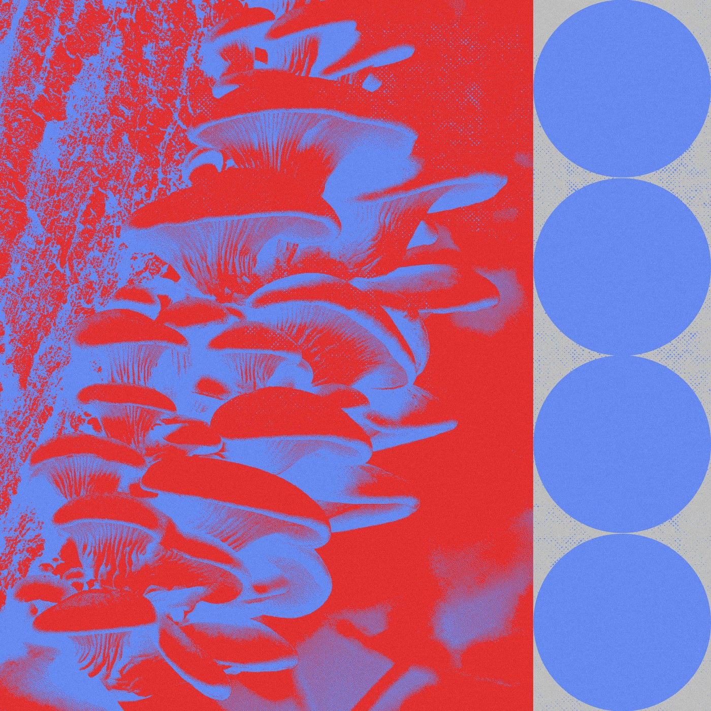 Download Ringo Bingo Remixes on Electrobuzz