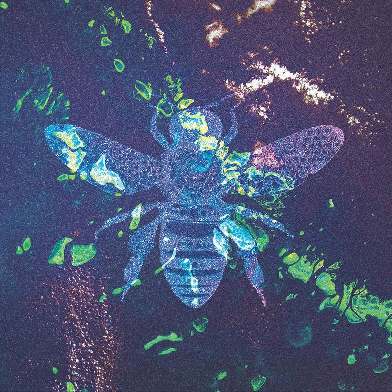 Download Holy Bee on Electrobuzz